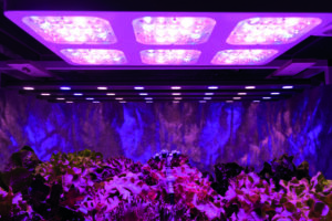 Vertical Farming SOURCE Zapp2photo Adobe Stock 300x200 - Razsvetljava za pridelavo rastlin, ssvetilkami LED do kmetij v nebotičniku
